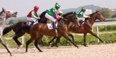 racehorses-300x149